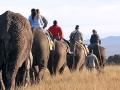 knysna elephant
