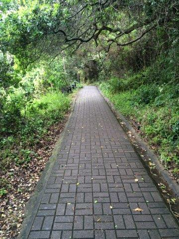 Pathways everywhere